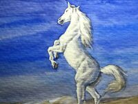 Watercolor Painting White Horse Animals Nature ACEO Art