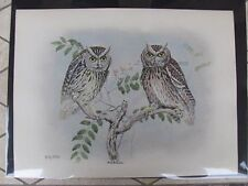 Original  Rex Brasher#373g,373h  Hand Colored Bird Print Scre. Owl #373gREX2 DSS