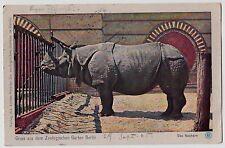 BERLIN Zoologischer Garten / Zoo / Nashorn Rhino * AK um 1905