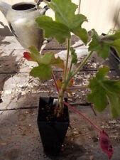 Full Sun Semi-evergreen Light Watering Plants & Seedlings