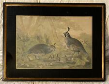 Alexander Pope Jr Antique Lithograph Valley Quail Birds Foster Bros Frame 26X20