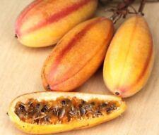 Passiflora Mollissima Purple Passion Fruit Seeds Delicious Fruit Seeds Rare Tree