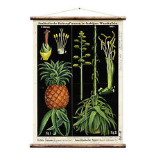 Pineapple & Agave Botanical Chart Wall Hanging by Erstwhile