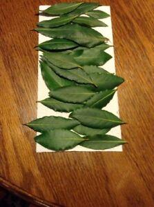 Bay Leaf, Organic Whole Fresh Picked Leaves, Bay Laurus Tree, 1/2 OZ., Free Ship