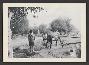 Egypt - Rare - Vintage Original Photo - Umm Kulthum - Famous Singer - As scan