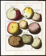 Antique Print-APPLES-TAB VIII-Pomologia-Knoop-1758
