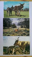 3 Animal Vintage colour postcards c1970s Red Deer Stag,Highland Cattle,Donkeys