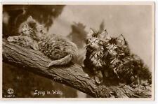 1930s Cute Little Cat Lying In Wait Kitten British photo postcard