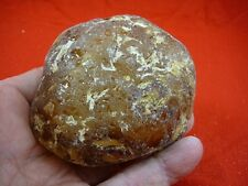 (k-2076) 160 g Rare Kauri tree Gum copal young Amber New Zealand Tane Mahuta