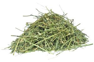 Andrographis Paniculata Kalmegh whole herb best buy 1 kg bulk buy