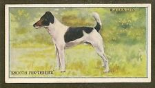 1923 Rare Uk Dog Art Rj Lea Chairman Cigarette Card Smooth Haired Fox Terrier