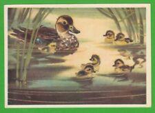 1979 Mallard Duck and Chicks,  artist Kanevsky   Soviet postcard