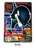 Animal Kaiser Evolution Evo Version Ver 7 Bronze Card (A045: Killer Whale)