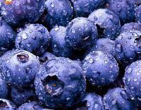 USA-Seller 100+pcs BLUEBERRY SEEDS Highbush Mix Perennial Fruit