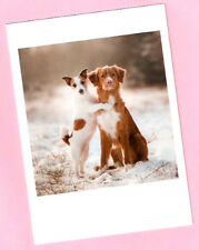 Nova Scotia Duck Tolling Retriever Jack Russell Terrier Christmas Cards Box 12