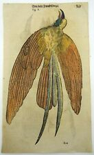 1669 BIRDS OF PARADISE - Conrad GESNER FOLIO with 2 WOODCUTS hand coloured