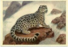 1960 VATAGIN Irbis Big Cat Snow Leopard Russian Unposted postcard