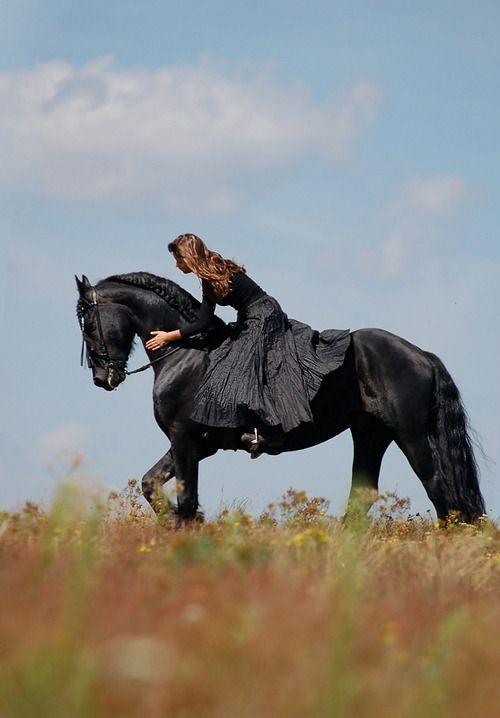 Centaur Equestrian shop