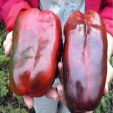 100Pcs Peper Seeds Russian Giant Sweet Pepper Seeds Organic Heirloom Vegetable