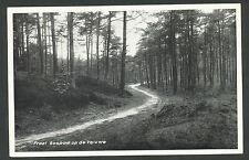 Fraai bospad op de Veluwe