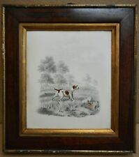 A Pointer & Partridge. Gouache & pencil by listed artist William Gunton c1830