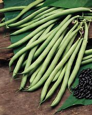 Vegetable - Kings Seeds Pictorial Packet - Climbing French Bean - Cobra