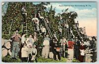 MARTINSBURG WEST VIRGINIA*WV*APPLE PICKING TIME*ORCHARD*LADDERS*PEOPLE*POSTCARD