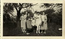 PHOTO ANCIENNE - VINTAGE SNAPSHOT - ANIMAL CHEVAL FAMILLE DRÔLE - HORSE FAMILY