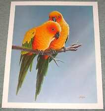 Sun Conures Pair: Beautiful 18x22 In. Art Print