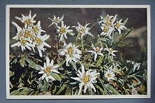 R&L Postcard: Beautiful Alipne Flower Design, Switzerland, Natural History