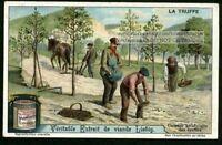 Artifically Seeding Truffles Farming Mushrooms Fungus c1910 Trade Ad Card