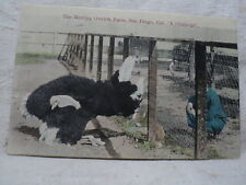 SAN DIEGO CA California The Bentley OSTRICH Farm Hand Colored 1908 Postcard