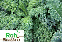 Kale Dwarf Blue Curled GROW Your Own as it's Easy & Satisfying 100 Seeds