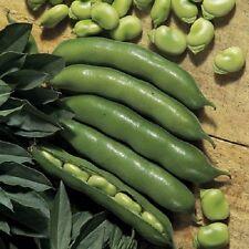 Vegetable - Dwarf Broad Bean The Sutton - 60 seeds  Sow Autumn Spring