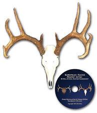 European skull mounts and deer horn plaque mounts.
