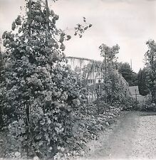 SURESNES c. 1950 -  Parc  Balade   Hauts-de Seine - DIV8280