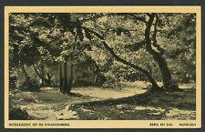 Berg en Dal  Bosgezicht op de Kwakkenberg