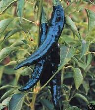 Pepper Hot Pasilla Bajio (Capsicum Annuum) Heirloom Vegetable 200 Seeds