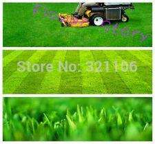 3000 Tall Fescue Grass Seeds Heat Tolerant Low Maintenanceideal lawn