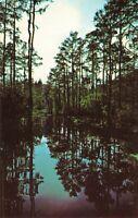 Postcard Okefenokee Swamp Park Waycross Georgia