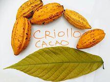 "1 Plant  24"" TALL Theobroma CRIOLLO Cacao Cocoa Chocolate Tropical Fruit Tree"