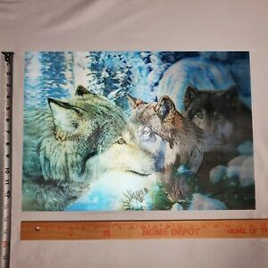 """3 Pictures Wolf Wolves 3D lenticular holographic picture 13.5""""  x 19.5"""""""