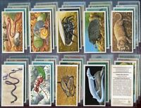 Trade Card Set, Brooke Bond Tea, INCREDIBLE CREATURES, Wild Animal, PO Box