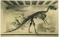 The Colorado Museum Of Natural History Denver Dinosaurs Vintage Postcard