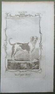 Mastiff Dog Antique Print Copper Plate Engraving Natural History Buffon 1791