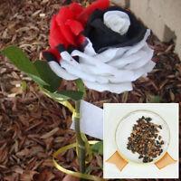 50Pcs Red White Rose Flower Seeds Plant Garden Mysterious Rare Bonsai Beautiful