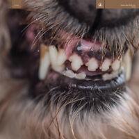 Blanck Mass - World Eater [New CD]