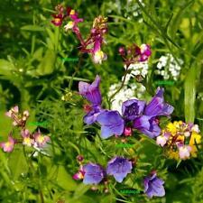 BIENEN- UND HUMMELWIESE - Blumenmischung Blumenwiese Bienenweide - ca. 500 Samen