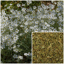 Chickweed, soap making supplies, teas, salves, creams, lotions or lip balms.