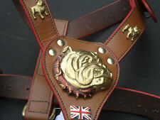 NEW LEATHER- BRITISH- BULL- DOG HARNESS IN 3-COLOURS WITH 3D BRASS HEAD